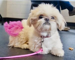 Pixie-perfect!