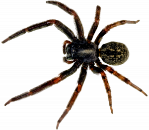 spider_PNG44