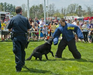 Patrolman Chris Barton of the Avon Police Dept. puts K9 officer Lennox through his paces with the help of a well-padded assistant, Nick Rennette, at the Avon Safety Fair.