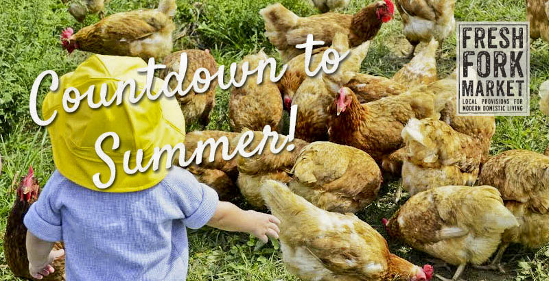 countdown-chickens