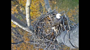 Eagle Cam Screenshot2