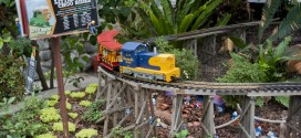 All Aboard! Train Show Delights at Miller Nature Preserve