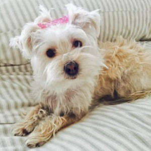 Little Charlotte, killed in dog attack.
