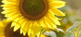 "Avon-on-the-Lake Garden Club: ""It Happens in Fall"" Flower Show"