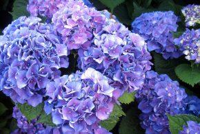 Herb Guild Garden Club July Meeting