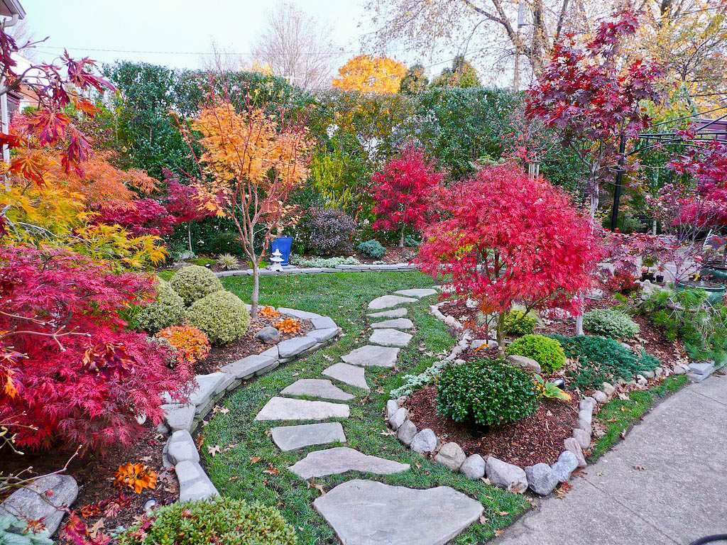 Bay Village Garden Club: Japanese Maple Garden - The ...
