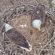 Hello World! First Eaglet Hatched in Avon Lake