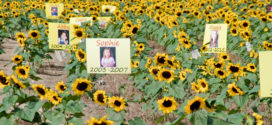 Maria's Field of Hope Now in Bloom