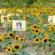 Maria's Field of Hope Now in Bloom